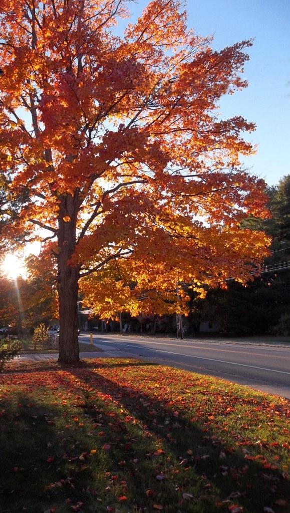 Sun Behind Fall Tree